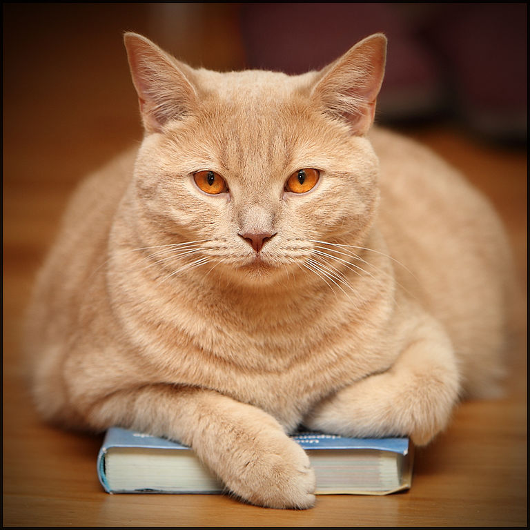 Grumpy Cat Reading