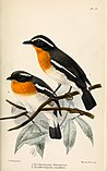 Catalogue of the Birds in the British Museum (1879 - 1879) (20552006016).jpg