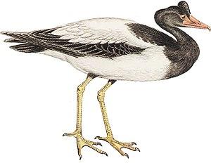 Gastornithiformes - 70 px