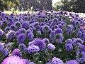 Central Botanic Garden of NASU - panoramio (3).jpg