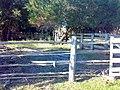 Cercado da mangueira - panoramio.jpg