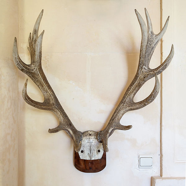Trophy of a deer hunted on St Hubert's day 1829 - Château de Tanlay, Yonne department, Burgundy, France.