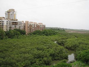 Charkop - An image of the vast stretch of mangroves at Charkop