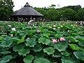 Chiba Park 2010b.jpg