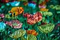 Chicago Botanic Garden, Glencoe, United States (Unsplash).jpg