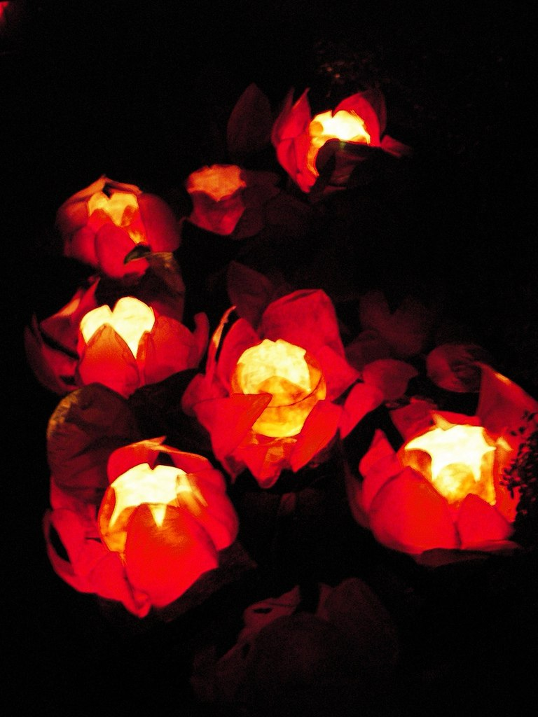 Chinese floating lotus lanterns