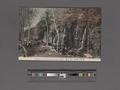 Chisujino Taki (waterfall) Kowakidani, Hakone (NYPL Hades-2360099-4043898).tiff