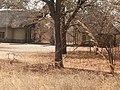 Chobe National Park.jpg
