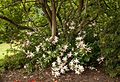 Christchurch Botanic Gardens, detail-2, 2016-02-04.jpg