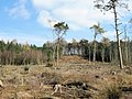 Clear-fell in Delamere Forest - geograph.org.uk - 1750697.jpg