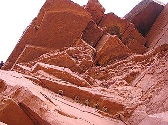 Paria Canyon-Vermilion Cliffs Wilderness - Cliff swallow nests