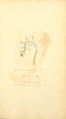 Coloured Figures of English Fungi or Mushrooms - t. 359.png