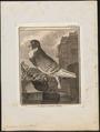Columba domestica var. gutturosa - 1700-1880 - Print - Iconographia Zoologica - Special Collections University of Amsterdam - UBA01 IZ18900145.tif