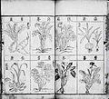 Compendium of Materia Medica 2.jpg