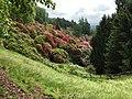 Conca dei Rododendri a maggio (2) - Burcina.jpg