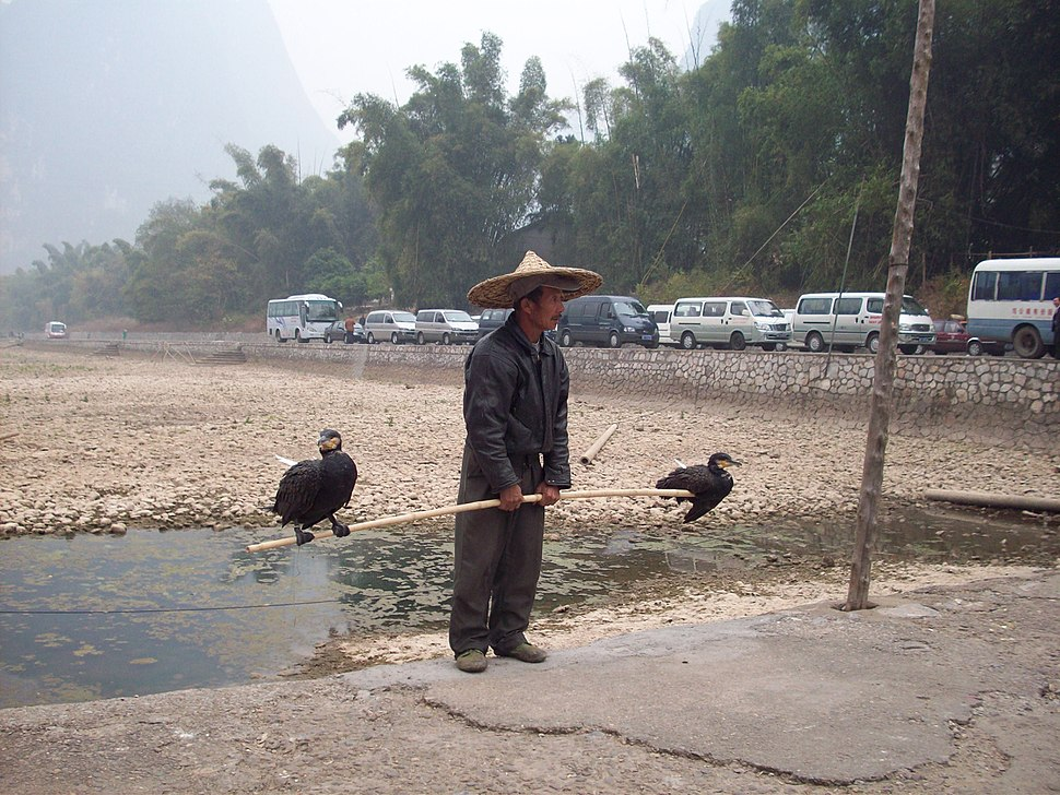 Cormorant chinese