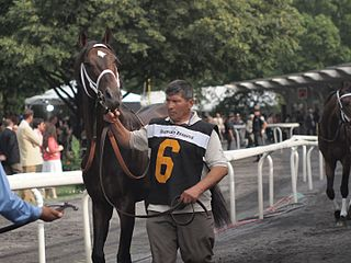 Court Vision American Thoroughbred racehorse