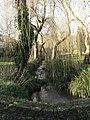 Coy Pond Gardens, upstream from bridge - geograph.org.uk - 658891.jpg