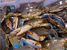 Blue crabs piled in a commercial fishing vessel
