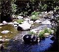 Creek, Oak Creek Canyon, AZ 7-30-13h (9510794812).jpg