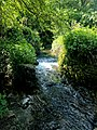 Creswell Gorge, Creswell Craggs, Notts (50).jpg