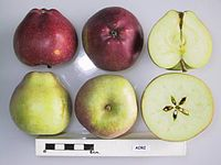 Cross section of Aori, National Fruit Collection (acc. 1977-114).jpg