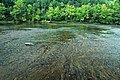 Cumberland River (just upstream from Cumberland Falls, Kentucky, USA) 2 (20040091791).jpg