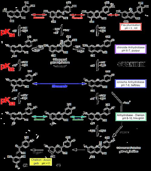 Stabileco de antocianidin estas dependa de pH.