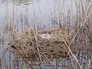 Hniezdo so znáškou