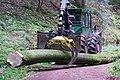Débusqueur HSM 904Z grume hêtre 01.jpg