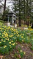 Daffodil Hill 02 - Lake View Cemetery (31618850224).jpg