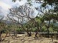 Dambulla, Sri Lanka - panoramio (112).jpg
