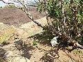 Dambulla, Sri Lanka - panoramio (47).jpg
