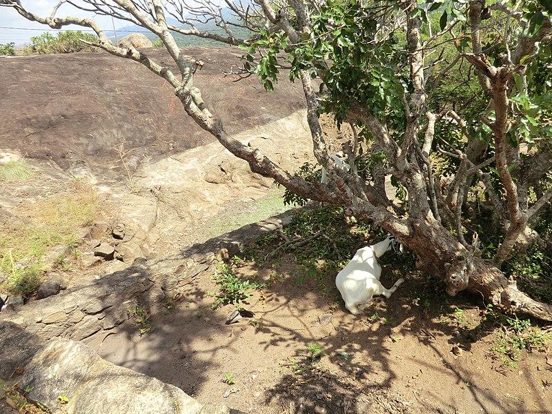 File:Dambulla, Sri Lanka - panoramio (47).jpg