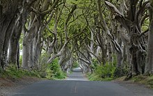 Dark Hedges near Armoy, Co Antrim (cropped).jpg