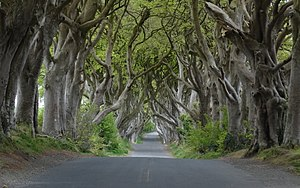 Dark Hedges - The Dark Hedges in 2016