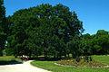 Das Naturdenkmal Georgseichen um den Georgsstein von 1839 auf dem Rasen vor dem Wilhelm-Busch-Museum in Hannover II.jpg