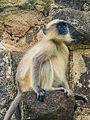 Daulatabad, Aurangabad - panoramio (26).jpg