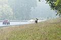 Deer by the highway (10697138273).jpg
