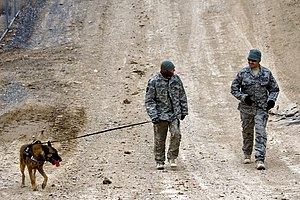 377th Air Base Wing - An airman and military working dog of the 377th Air Base Wing deployed to Forward Operating Base Lagman, Afghanistan following an explosive ordnance disposal exercise
