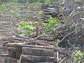 Degradação Florestal Amazônia 12.jpg