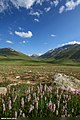 Deosai, Astore, Gilgit-Baltistan, Pakistan (36031071225).jpg