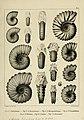 Description des mollusques fossiles qui se trouvent dans les grès verts des environs de Genève (9525356038).jpg