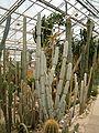 Desert America Greenhouse BotGardDresden070219 186.jpg