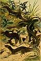 Deutschlands Amphibien und Reptilien (1890) (20895740641).jpg