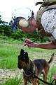 Devil Dogs take flight MP dogs, handlers prepare for deployment DVIDS335366.jpg