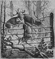 Die Gartenlaube (1870) b 797.jpg