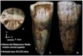 Diente antiguo del pleistoceno medio.png