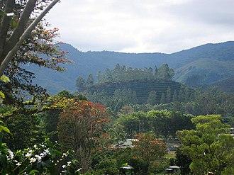 Economics of coffee - A coffee plantation on a hill near Orosí, Costa Rica.