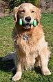 Dog with dumbbell.jpg